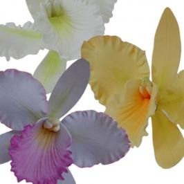 Kit Orquidea Cattleya: Cortadores y marcador
