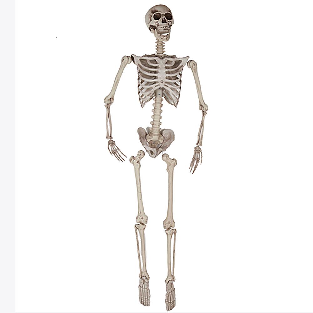 Esqueleto Colgante 1,65 m