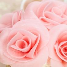 Flores y Hojas