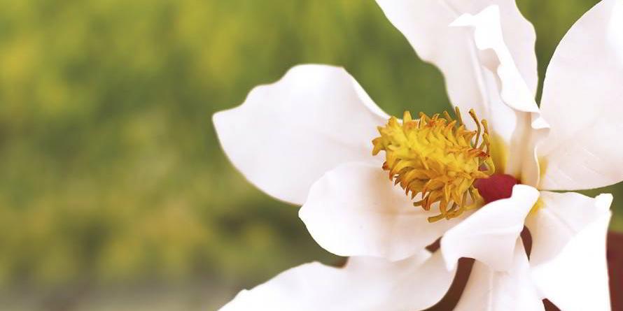Como Hacer Una Magnolia Con Pasta De Goma Paso A Paso